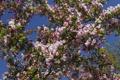Картинка цветение, весна, ветки, макро, дерево