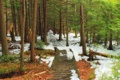 Картинка лес, листья, снег, деревья, парк, дорожка