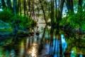 Картинка лес, небо, деревья, река, камни, заросли