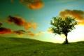 Картинка небо, облака, пейзаж, природа, холмы, травка, зелень. дерево