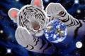 Картинка планета, арт, Земля, тигры, William Schimmel