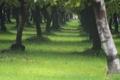 Картинка трава, аллея, дерево, листья, аллеи, деревья, природа