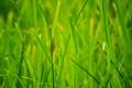 Картинка природа, трава, макро, лето