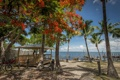 Картинка море, деревья, курорт, беседка