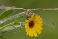 Картинка цветок, макро, стрекоза, крылышки