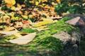 Картинка осень, листва, камень, мох