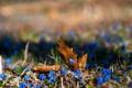 Картинка природа, листья, цветы