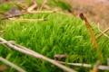 Картинка зелень, лес, мох