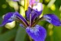 Картинка листья, цветок, растение, лепестки, природа