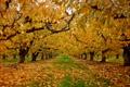 Картинка осень, природа, сад