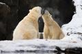 Картинка зима, снег, скалы, хищники, пасть, пара, зоопарк