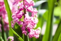 Картинка лепестки, макро, цветки, гиацинт, flowers, цветы