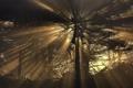 Картинка лес, лучи, свет, деревья, туман