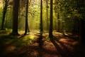 Картинка лес, лучи, природа, листва