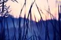 Картинка цвета, солнце, закат, природа, фото, обои, растения
