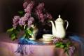 Картинка цветы, фото, чашка, ваза, кувшин, натюрморт, сирень