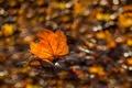 Картинка природа, осень, лист