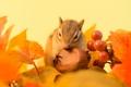 Картинка осень, листья, ягоды, веточка, орех, бурундук, зимний припас