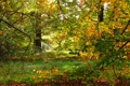 Картинка осень, ветки, природа, парк, фото