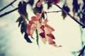 Картинка листья, осень, дуб, макро