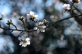 Картинка природа, цвет, ветка, весна