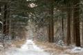 Картинка зима, дорога, лес, снег, сосны, Dewollewei