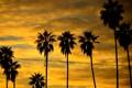 Картинка небо, облака, закат, пальмы