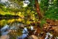 Картинка камни, река, заросли, эксмур, листья, деревья, великобритания