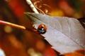 Картинка осень, листва, насекомое