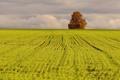 Картинка поле, пейзаж, природа, дерево
