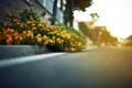 Картинка дорога, асфальт, листья, дома, фокус, даль, цветочки