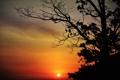 Картинка небо, солнце, облака, закат, дерево, силуэт