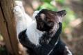 Картинка кот, лапки, кошак, котяра