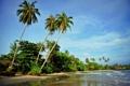 Картинка море, волны, пляж, природа, пальмы