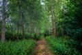 Картинка зелень, лес, деревья, кусты, просека