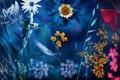 Картинка монтаж, природа, цветы
