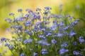 Картинка зелень, трава, цветы, размытость