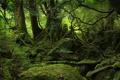 Картинка мох, деревья, камень, природа, лес, чаща