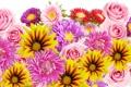 Картинка розы, лепестки, цветы