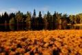 Картинка осень, лес, трава, река, желтая