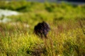 Картинка полянка, люди, трава, дудинка