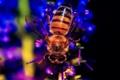 Картинка природа, пчела, насекомое