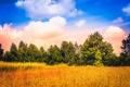 Картинка поле, небо, облака, деревья
