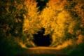 Картинка природа, осень, тунель