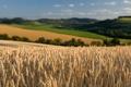 Картинка пшеница, поле, небо, природа, поля