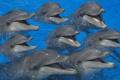 Картинка море, вода, бассейн, дельфины