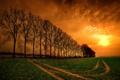 Картинка дорога, поле, небо, облака, деревья, закат