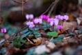 Картинка фиолетовый, цветы, весна