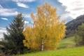 Картинка осень, небо, облака, деревья, склон