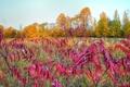 Картинка листья, осень, деревья, куст, луг, небо
